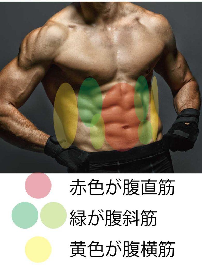 トレ 腹筋 下部 筋